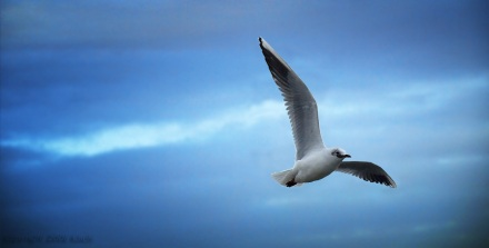 Fri som fuglen